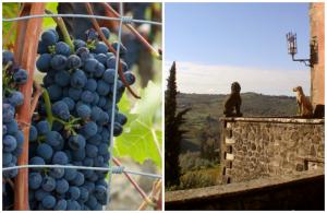 Wine-Tasting-Chianti