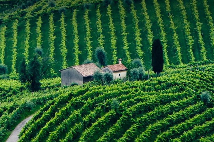 Wine & Food Tours