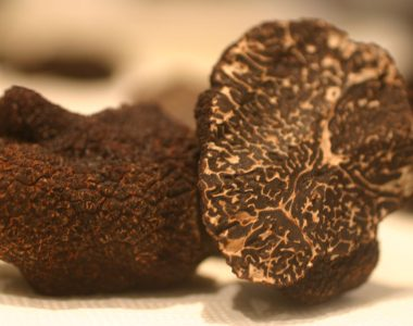Truffle Hunting in Italy an old age tradition
